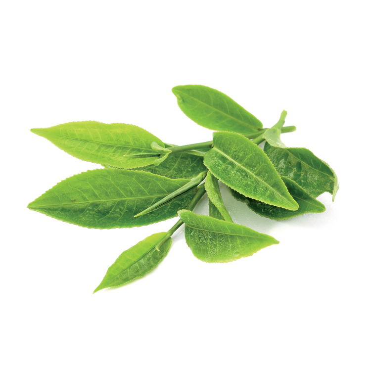 chewing gum au the vert